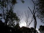 koyojurin-canopy.JPG